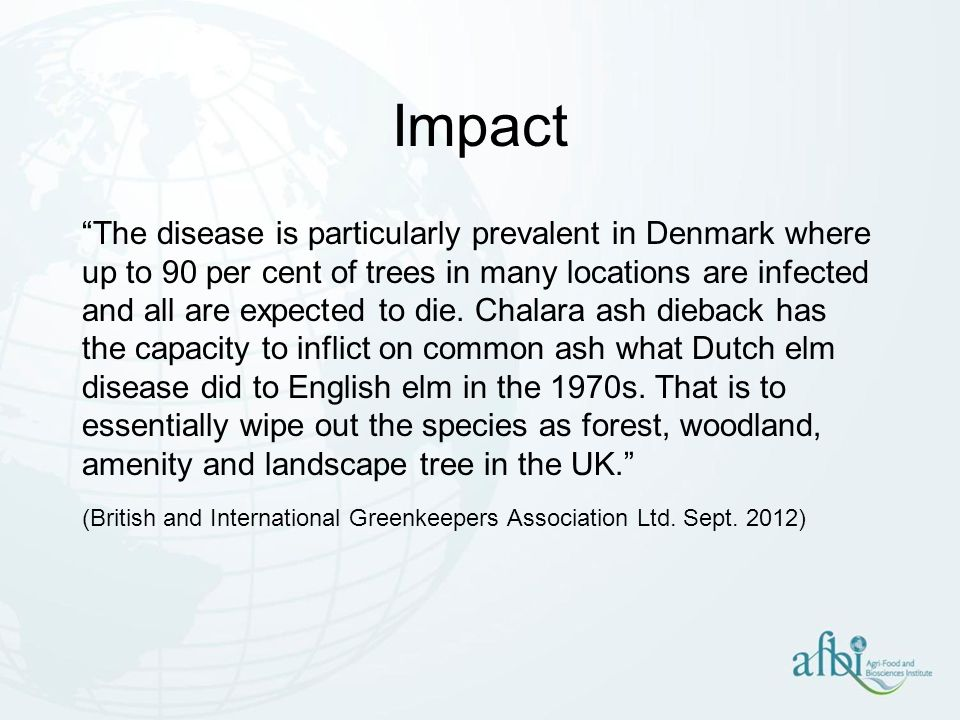Impact The disease is particularly prevalent in Denmark where up to 90 per cent of trees in many locations are infected and all are expected to die. C
