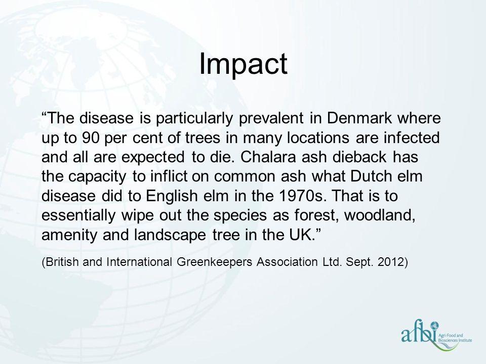 intensive dieback of ash (Chalara fraxinea) on European ash (Fraxinus excelsior)