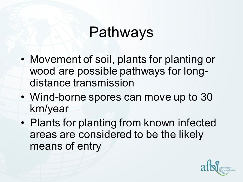 Spread from plant to plant Aerial spread –Asexual spores are not thought to be an important means of dissemination