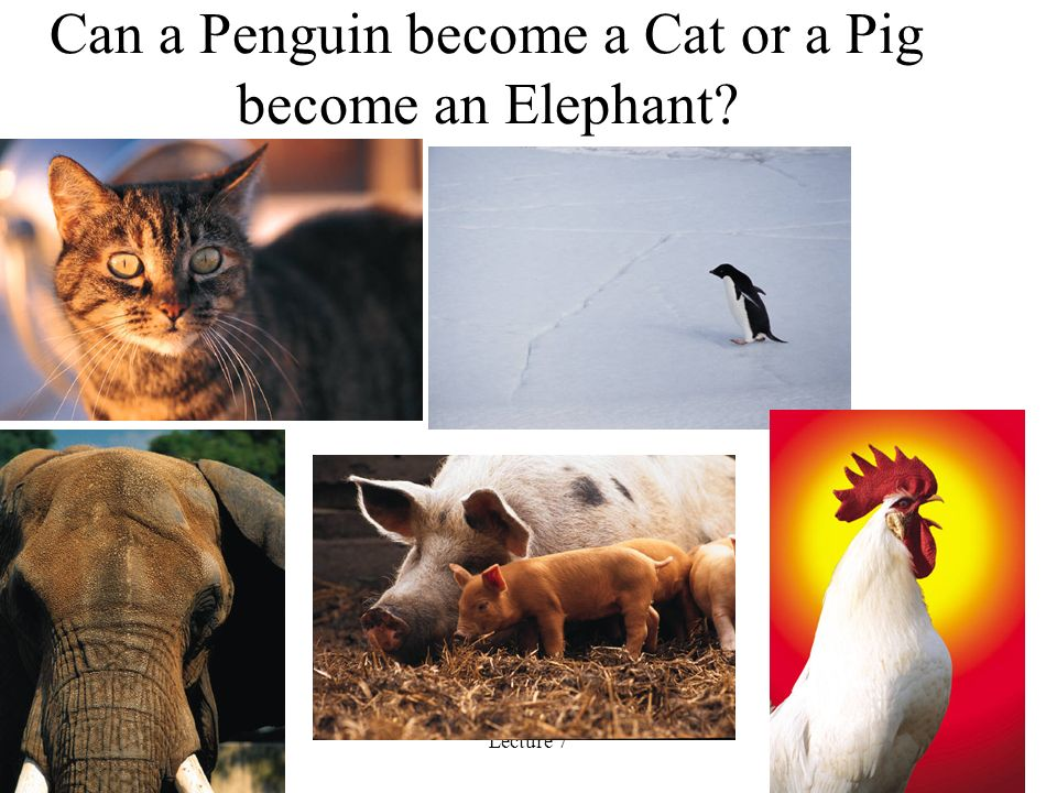 Lecture 729 Can a Penguin become a Cat or a Pig become an Elephant
