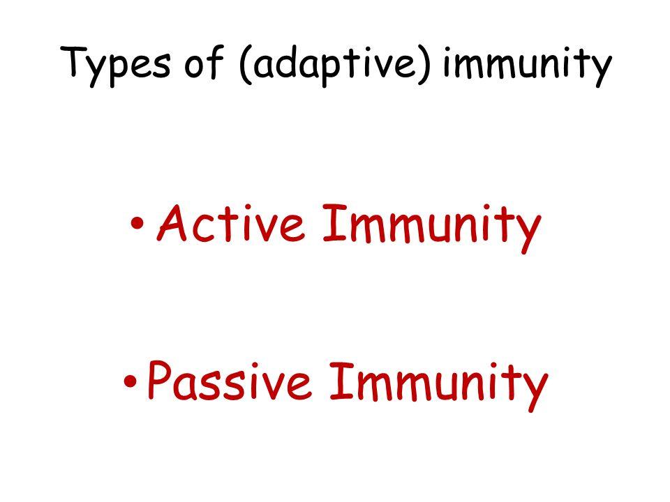 Types of (adaptive) immunity Active Immunity Passive Immunity