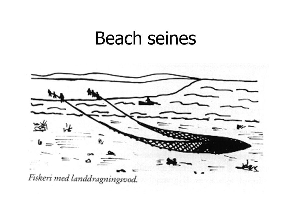 Beach seines