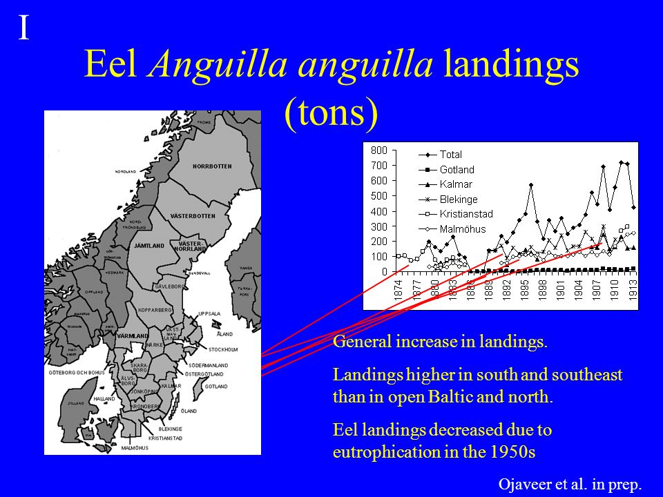 Eel Anguilla anguilla landings (tons) General increase in landings.