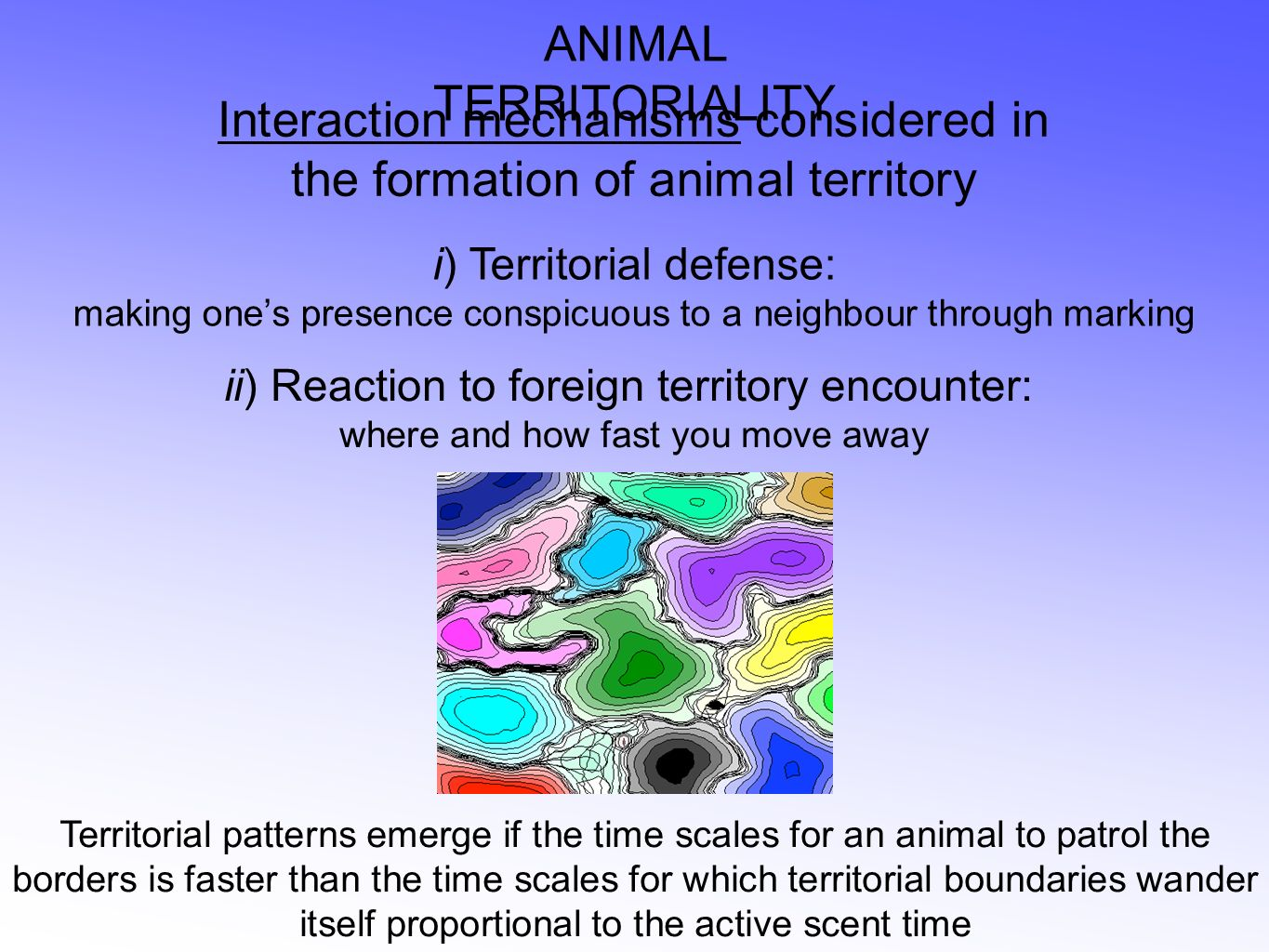 ANIMAL TERRITORIALITY Interaction mechanisms considered in the formation of animal territory i) Territorial defense: making ones presence conspicuous to a neighbour through marking ii) Reaction to foreign territory encounter: where and how fast you move away Territorial patterns emerge if the time scales for an animal to patrol the borders is faster than the time scales for which territorial boundaries wander itself proportional to the active scent time