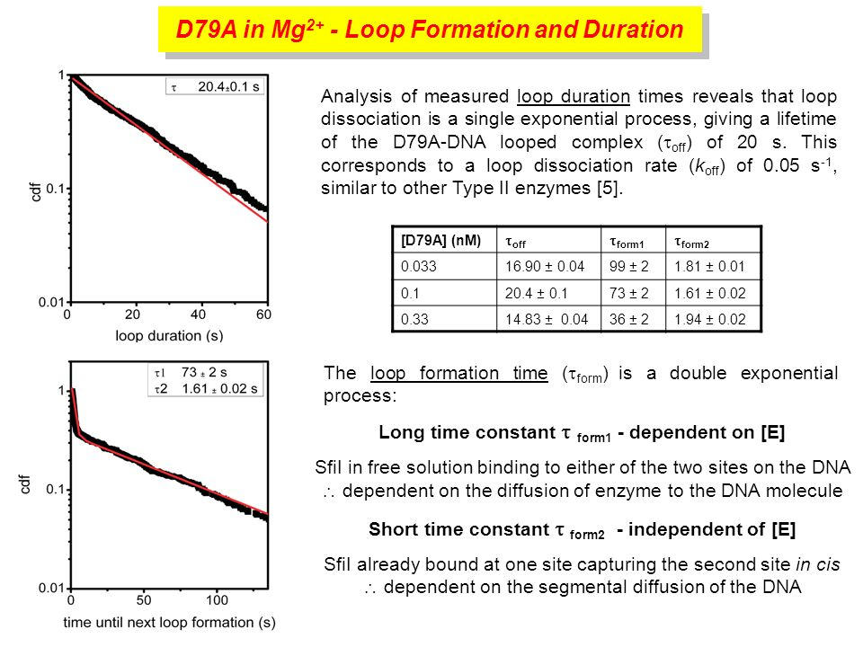D79A in Mg 2+ - Loop Formation and Duration The loop formation time ( form ) is a double exponential process: [D79A] (nM) off form1 form ± ± ± ± ± ± ± ± ± 0.02 Analysis of measured loop duration times reveals that loop dissociation is a single exponential process, giving a lifetime of the D79A-DNA looped complex ( off ) of 20 s.