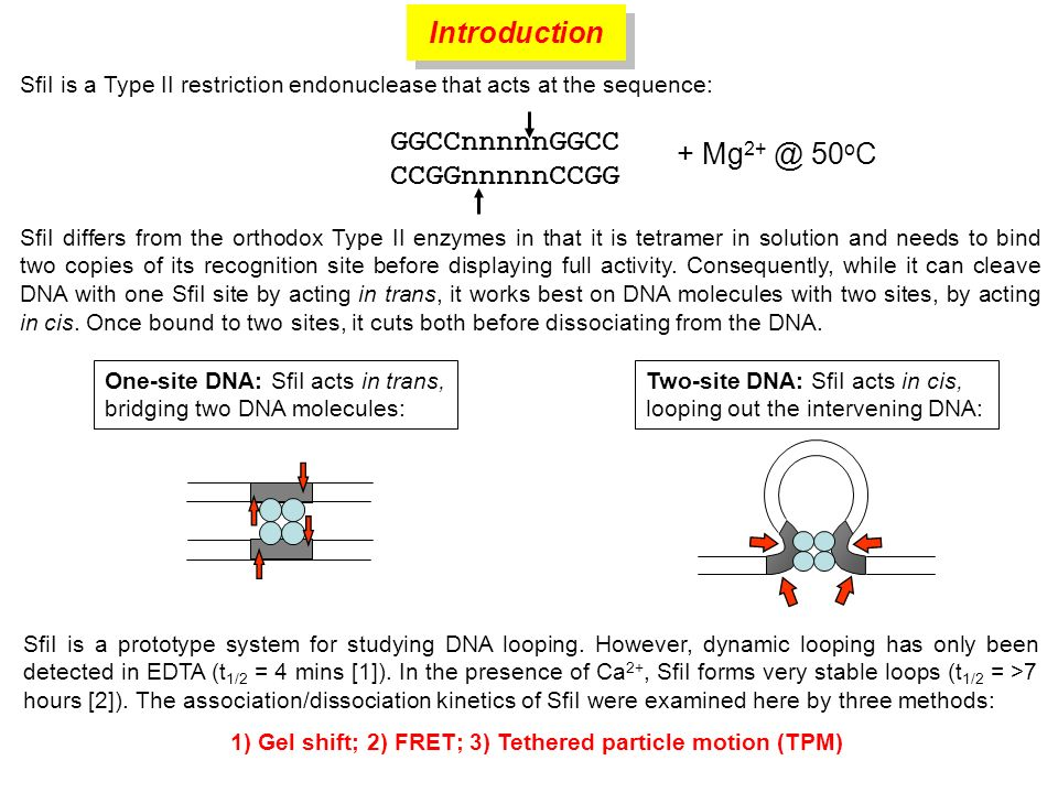 SfiI is a Type II restriction endonuclease that acts at the sequence: GGCCnnnnnGGCC CCGGnnnnnCCGG + Mg 2+ @ 50 o C Two-site DNA: SfiI acts in cis, loo