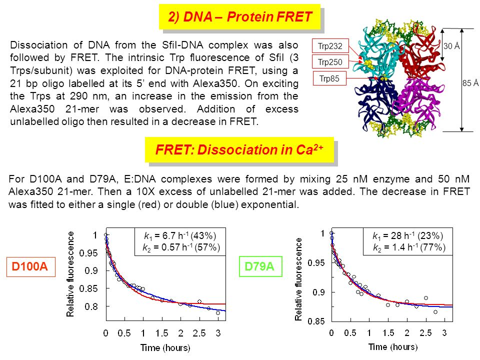 For D100A and D79A, E:DNA complexes were formed by mixing 25 nM enzyme and 50 nM Alexa350 21-mer. Then a 10X excess of unlabelled 21-mer was added. Th