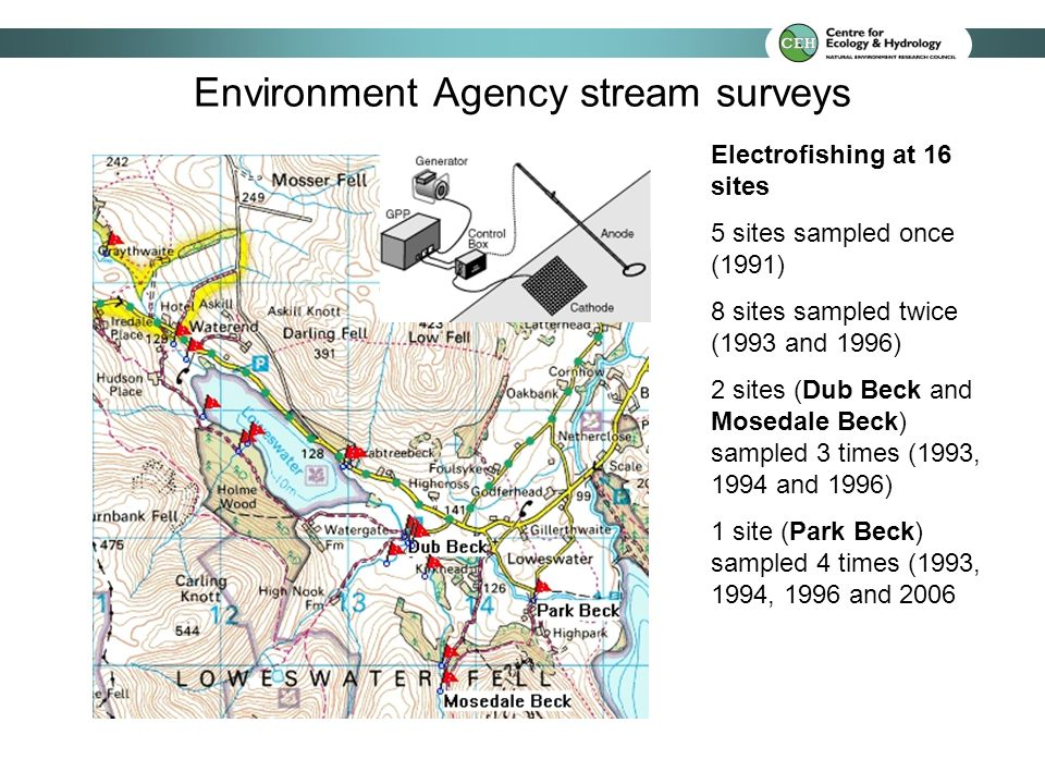 Environment Agency stream surveys Electrofishing at 16 sites 5 sites sampled once (1991) 8 sites sampled twice (1993 and 1996) 2 sites (Dub Beck and Mosedale Beck) sampled 3 times (1993, 1994 and 1996) 1 site (Park Beck) sampled 4 times (1993, 1994, 1996 and 2006