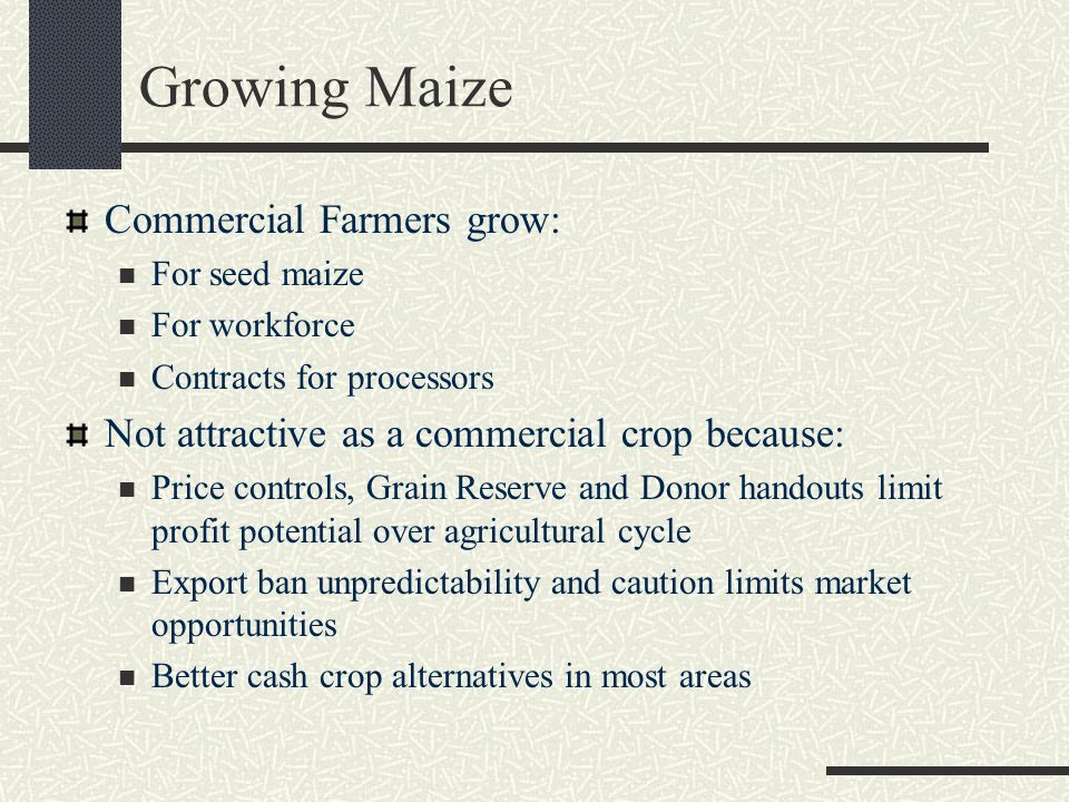 Growing Maize Commercial Farmers grow: For seed maize For workforce Contracts for processors Not attractive as a commercial crop because: Price contro