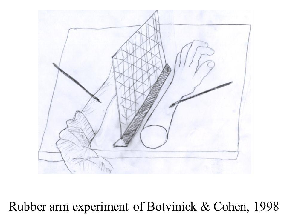 Rubber arm experiment of Botvinick & Cohen, 1998