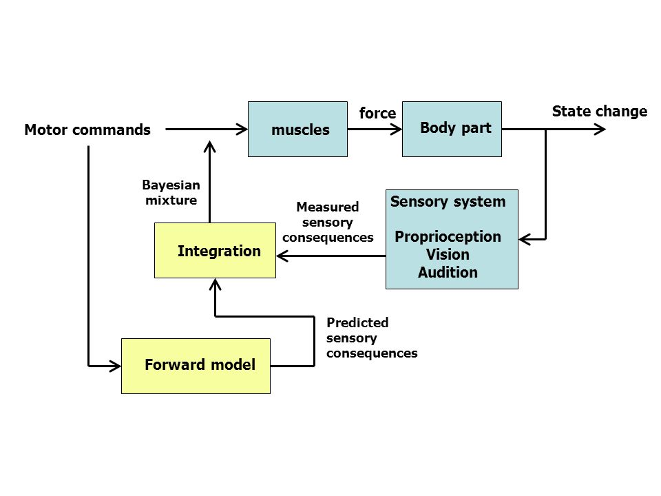 1.Perturbations that can affect the motor plant have multiple time scales.