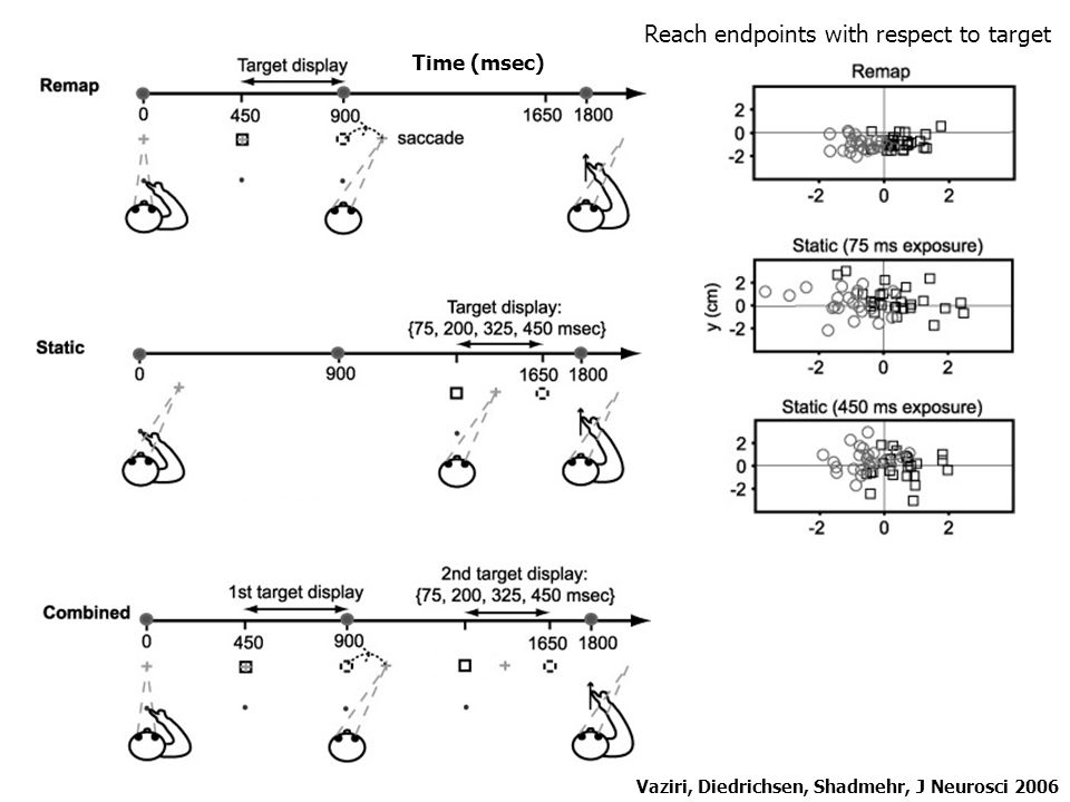 Vaziri, Diedrichsen, Shadmehr, J Neurosci 2006 Variance in reach errors indicates an integration of the predicted and actual sensory consequence of oculomotor commands Motor commands Sensory system Measured sensory input Forward model Predicted sensory consequences Integration Estimate of target location