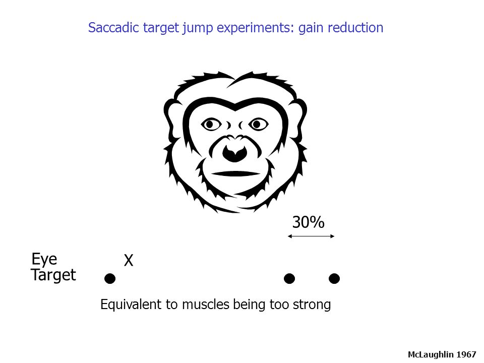 Equivalent to muscles being too strong McLaughlin 1967 Target Eye X 30% Saccadic target jump experiments: gain reduction