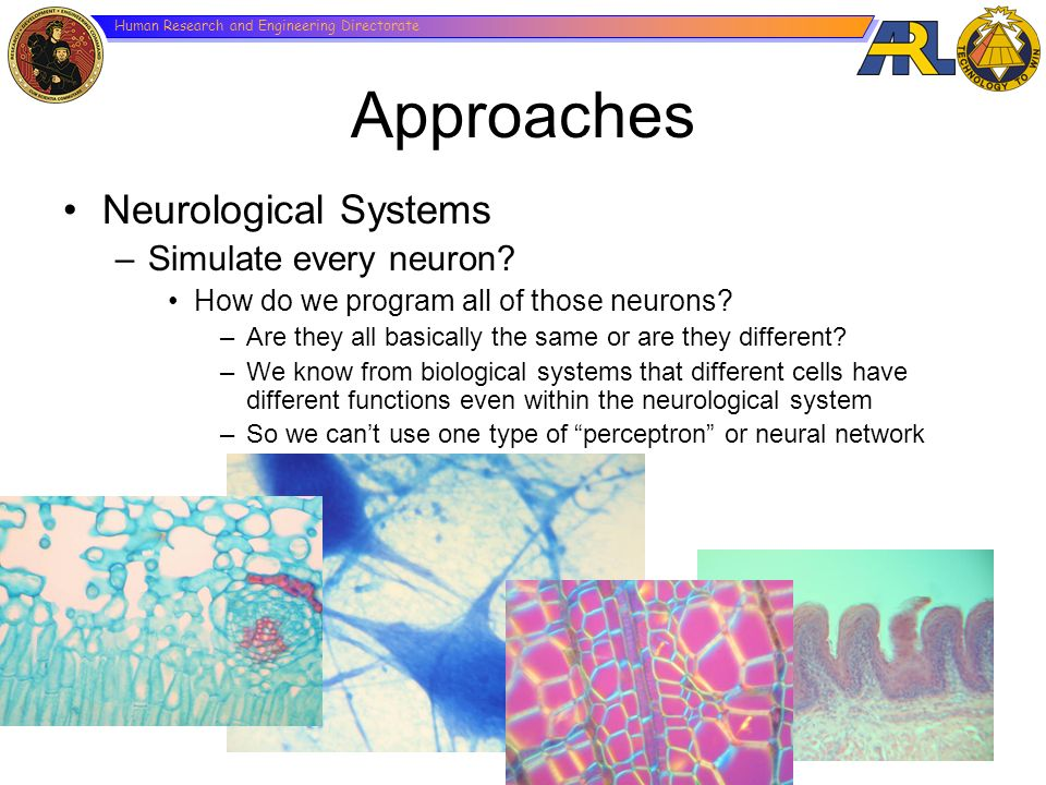 Human Research and Engineering Directorate Approaches Neurological Systems –Simulate every neuron? How do we program all of those neurons? –Are they a
