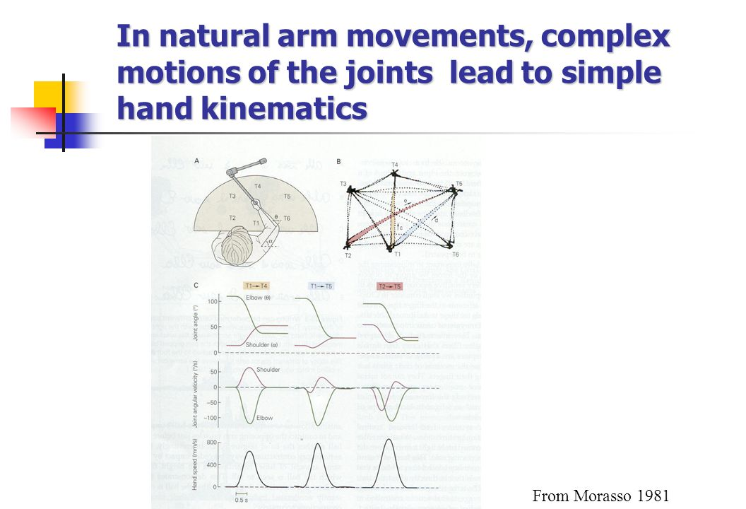 In natural arm movements, complex motions of the joints lead to simple hand kinematics From Morasso 1981
