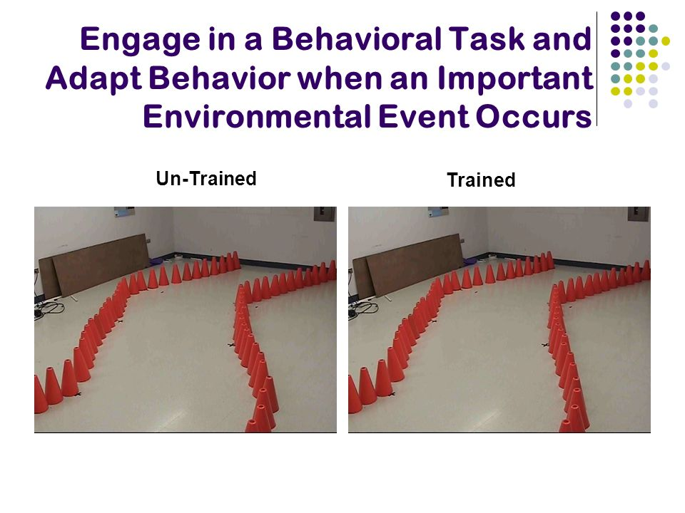Engage in a Behavioral Task and Adapt Behavior when an Important Environmental Event Occurs Un-Trained Trained