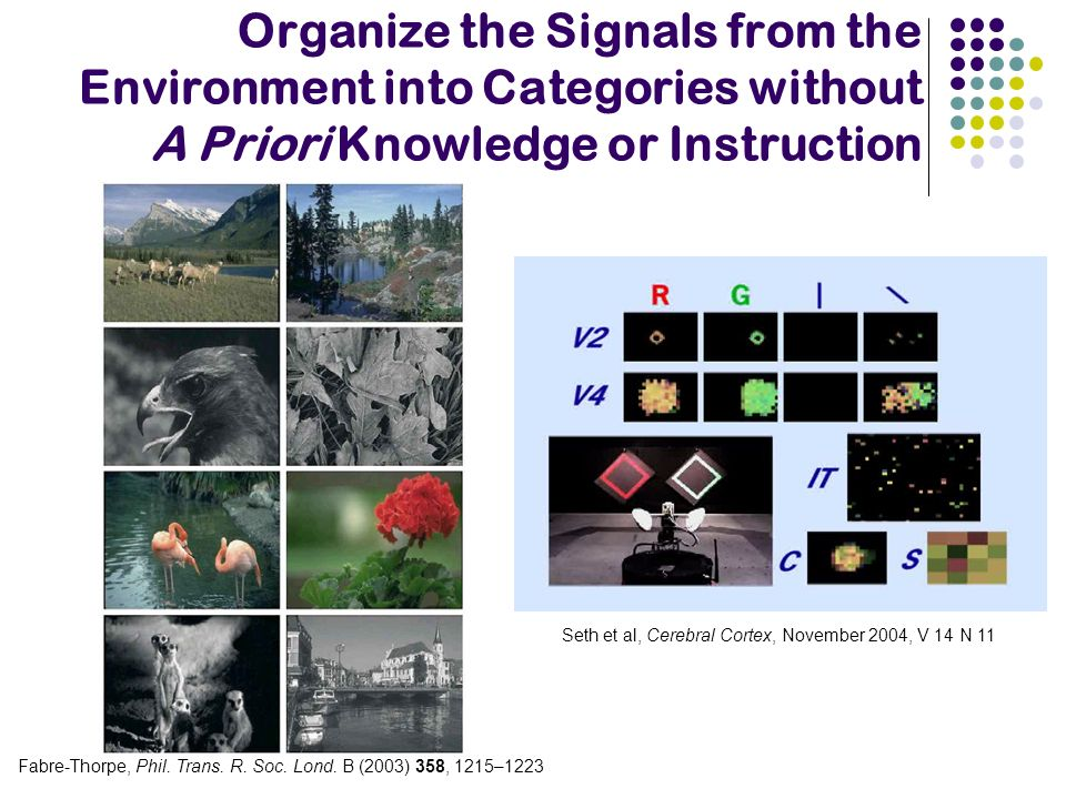 Organize the Signals from the Environment into Categories without A Priori Knowledge or Instruction Fabre-Thorpe, Phil. Trans. R. Soc. Lond. B (2003)