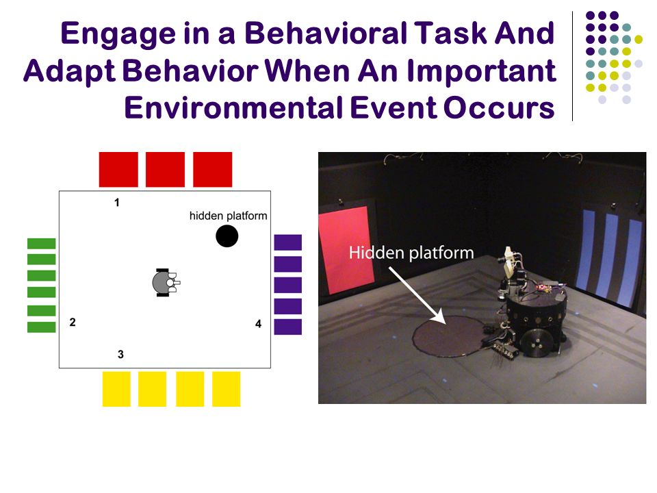 Engage in a Behavioral Task And Adapt Behavior When An Important Environmental Event Occurs