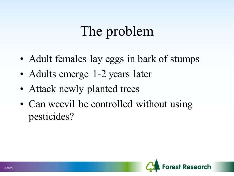 Adult females lay eggs in bark of stumps Adults emerge 1-2 years later Attack newly planted trees Can weevil be controlled without using pesticides.