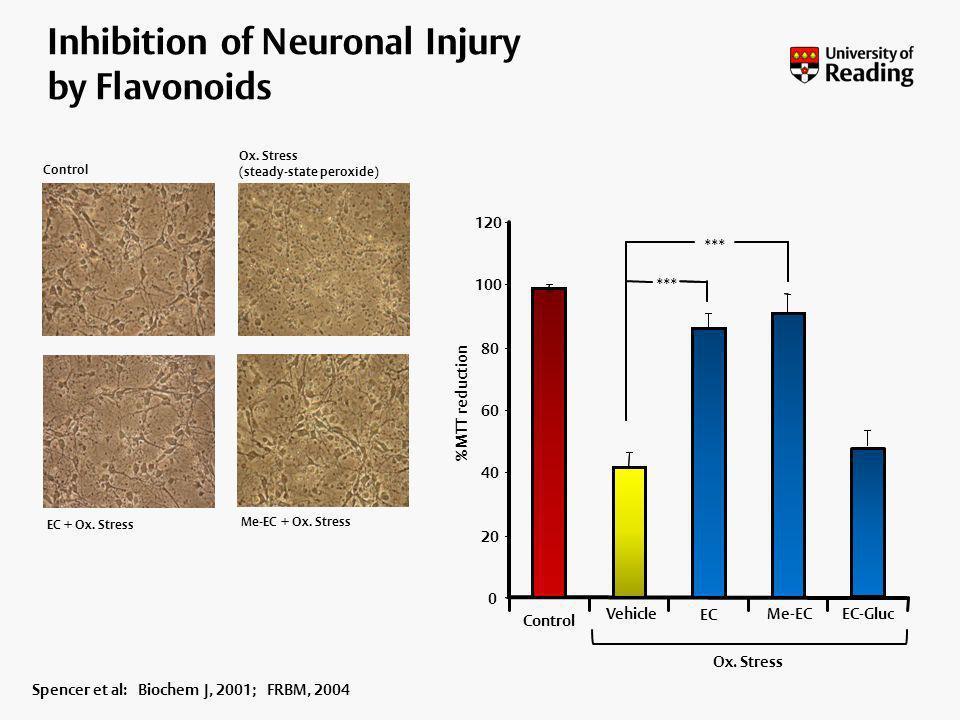 Inhibition of Neuronal Injury by Flavonoids Control Ox. Stress (steady-state peroxide) EC + Ox. Stress Me-EC + Ox. Stress Spencer et al: Biochem J, 20