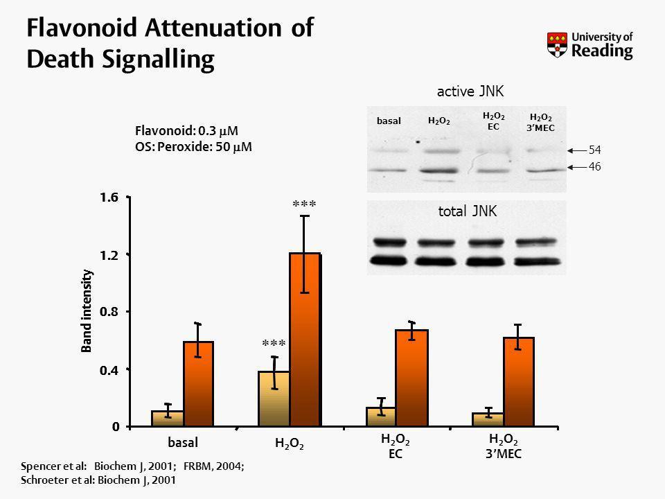 Flavonoid Attenuation of Death Signalling Spencer et al: Biochem J, 2001; FRBM, 2004; Schroeter et al: Biochem J, 2001