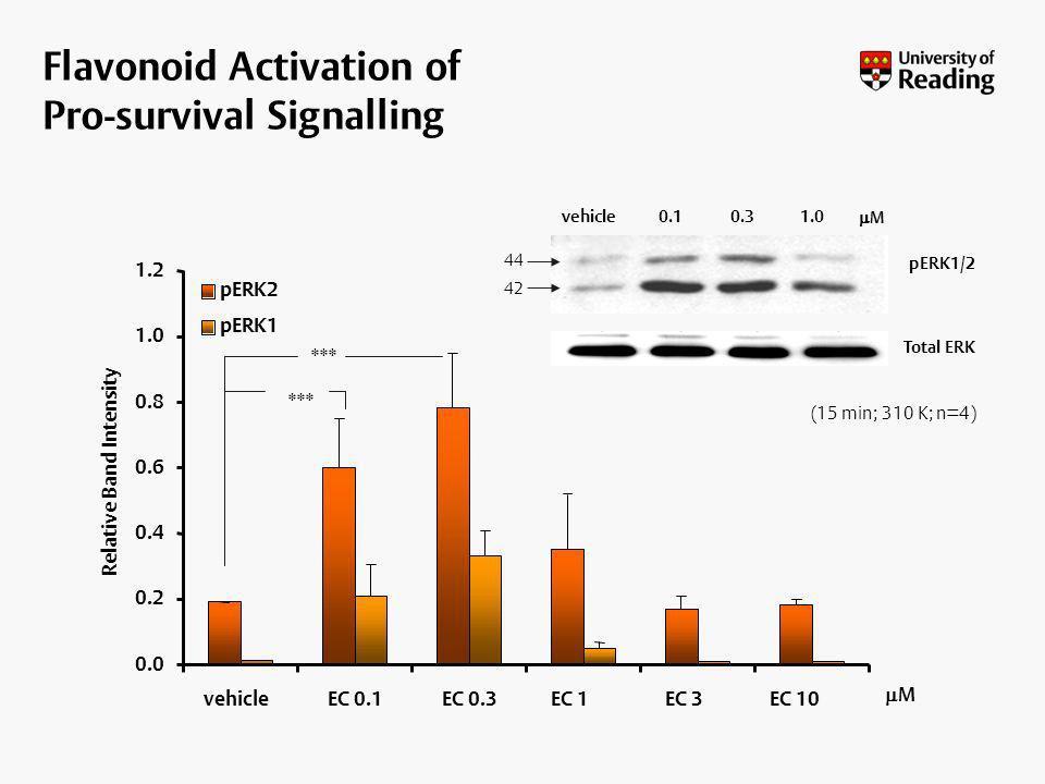 Flavonoid Activation of Pro-survival Signalling vehicle0.10.31.0 M 44 42 pERK1/2 Total ERK (15 min; 310 K; n=4) 0.0 0.2 0.4 0.6 0.8 1.0 1.2 vehicleEC