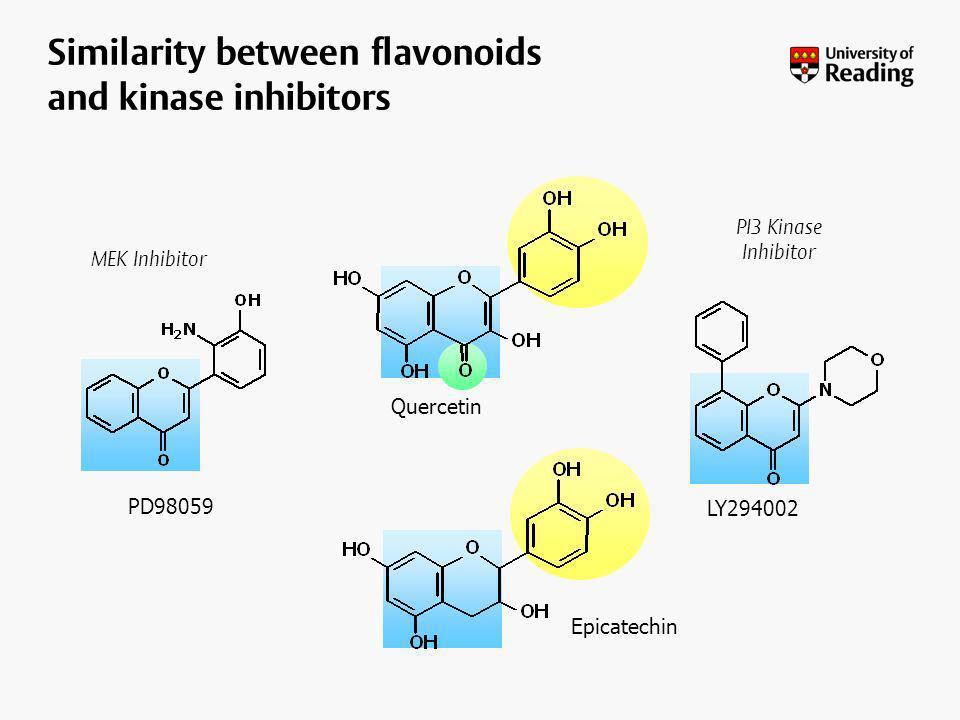 LY294002 PD98059 Epicatechin PI3 Kinase Inhibitor MEK Inhibitor Quercetin Similarity between flavonoids and kinase inhibitors