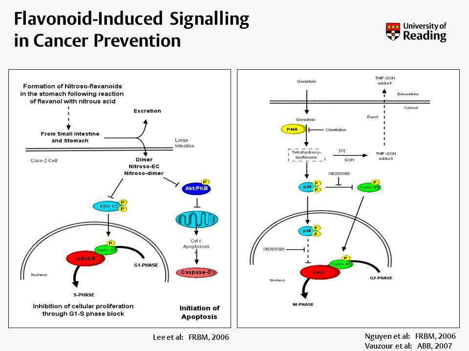 Lee et al (2006) FRBM 40, 323-334 Flavonoid-Induced Signalling in Cancer Prevention Lee et al: FRBM, 2006 Nguyen et al: FRBM, 2006 Vauzour et al: ABB,