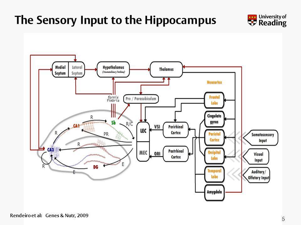 26 The Sensory Input to the Hippocampus Rendeiro et al: Genes & Nutr, 2009