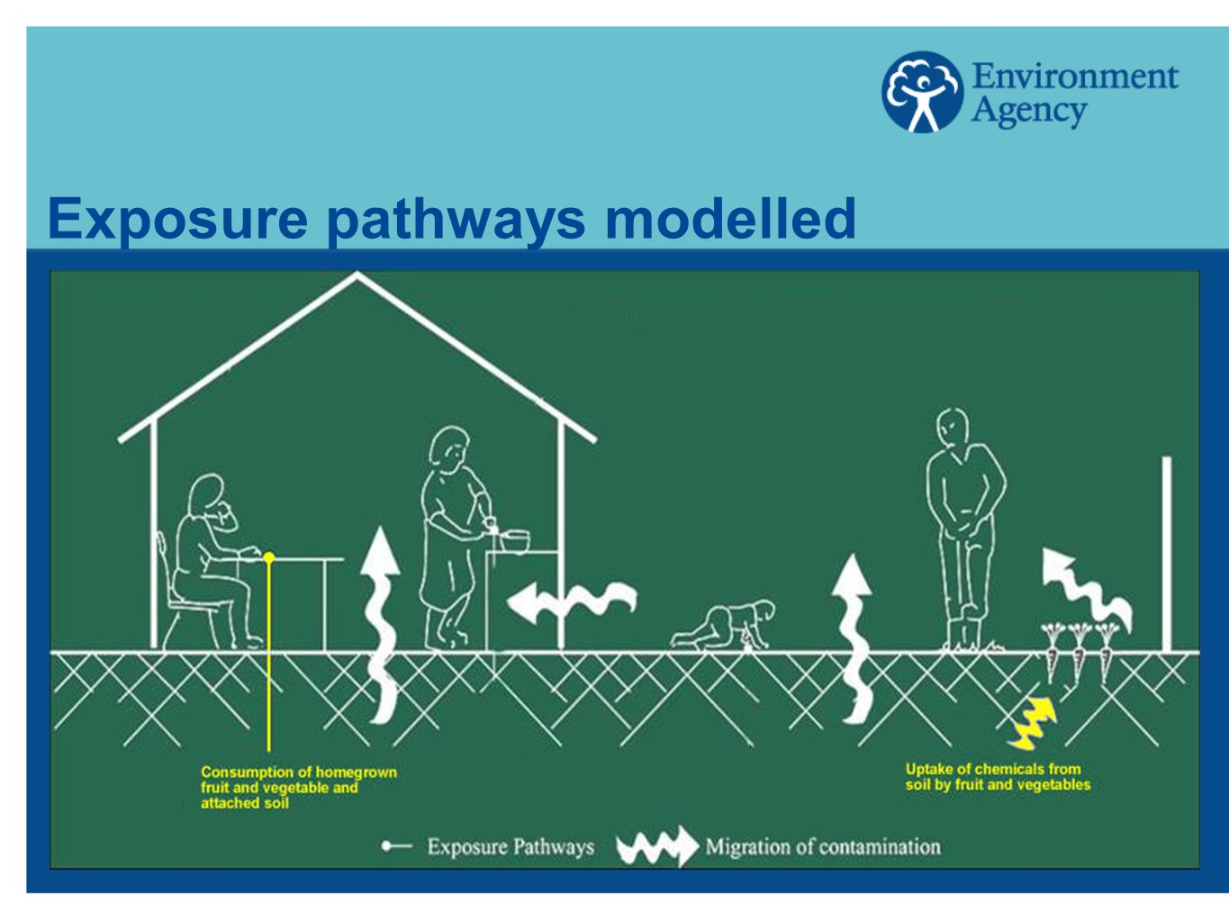 Exposure pathways modelled