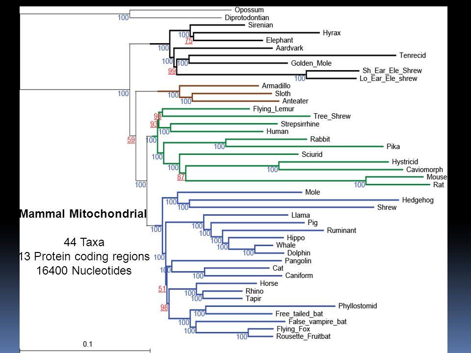 Mammal Mitochondrial 44 Taxa 13 Protein coding regions 16400 Nucleotides