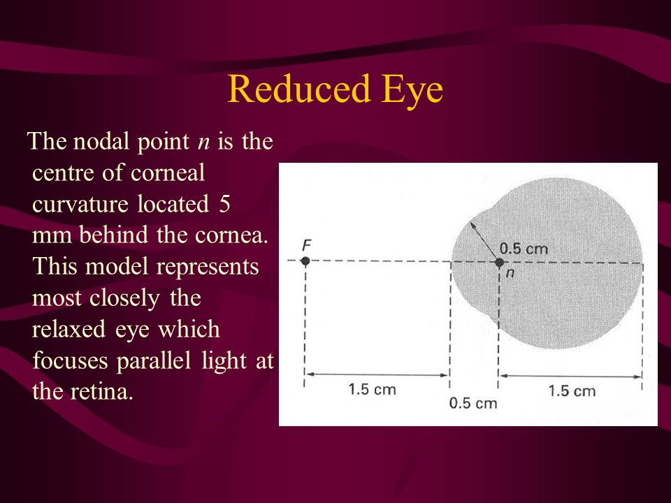Reduced Eye The nodal point n is the centre of corneal curvature located 5 mm behind the cornea. This model represents most closely the relaxed eye wh