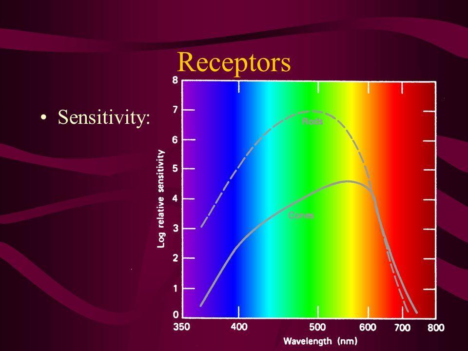 Receptors Sensitivity: