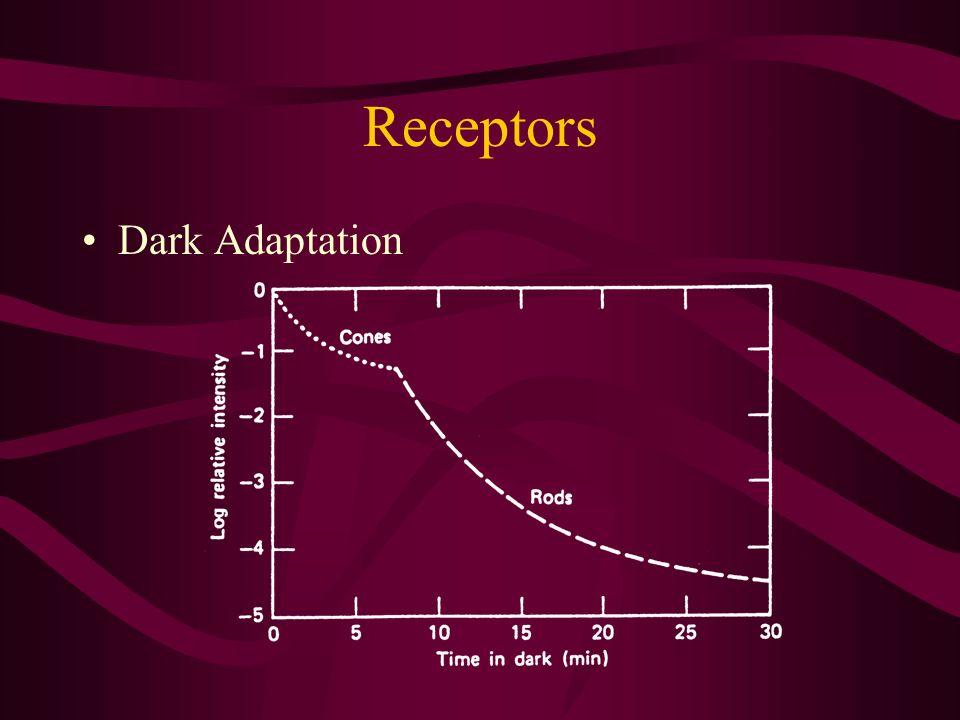 Receptors Dark Adaptation