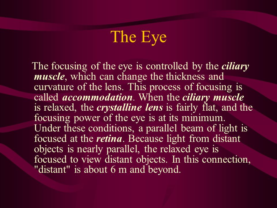The Eye The focusing of the eye is controlled by the ciliary muscle, which can change the thickness and curvature of the lens. This process of focusin