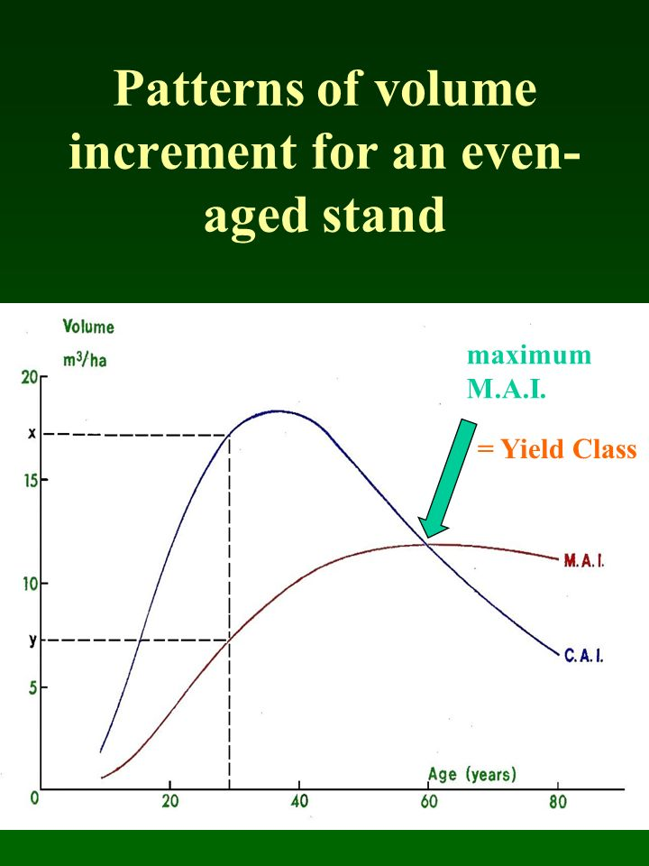 Patterns of volume increment for an even- aged stand maximum M.A.I. = Yield Class