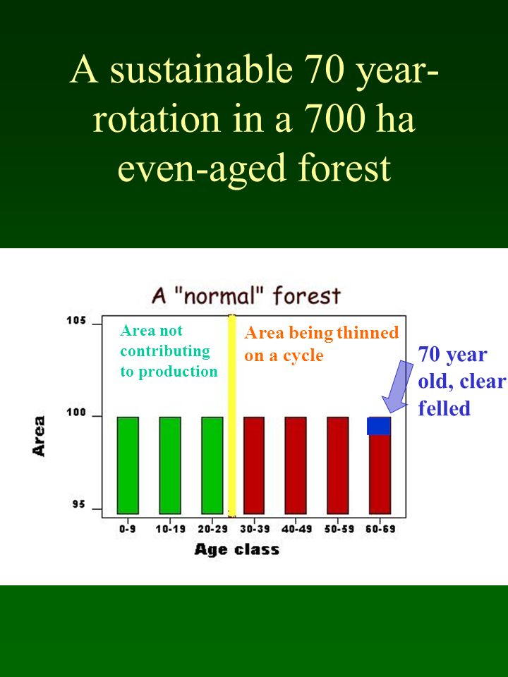 A sustainable 70 year- rotation in a 700 ha even-aged forest Area not contributing to production Area being thinned on a cycle 70 year old, clear fell
