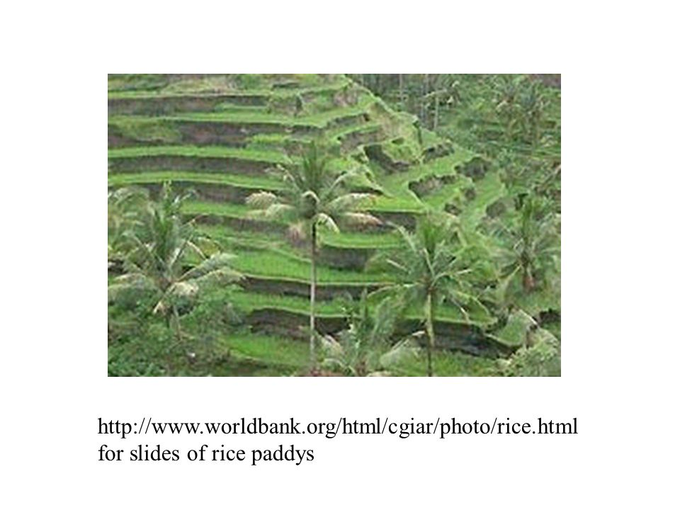 http://www.worldbank.org/html/cgiar/photo/rice.html for slides of rice paddys