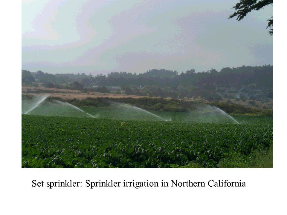 Set sprinkler: Sprinkler irrigation in Northern California