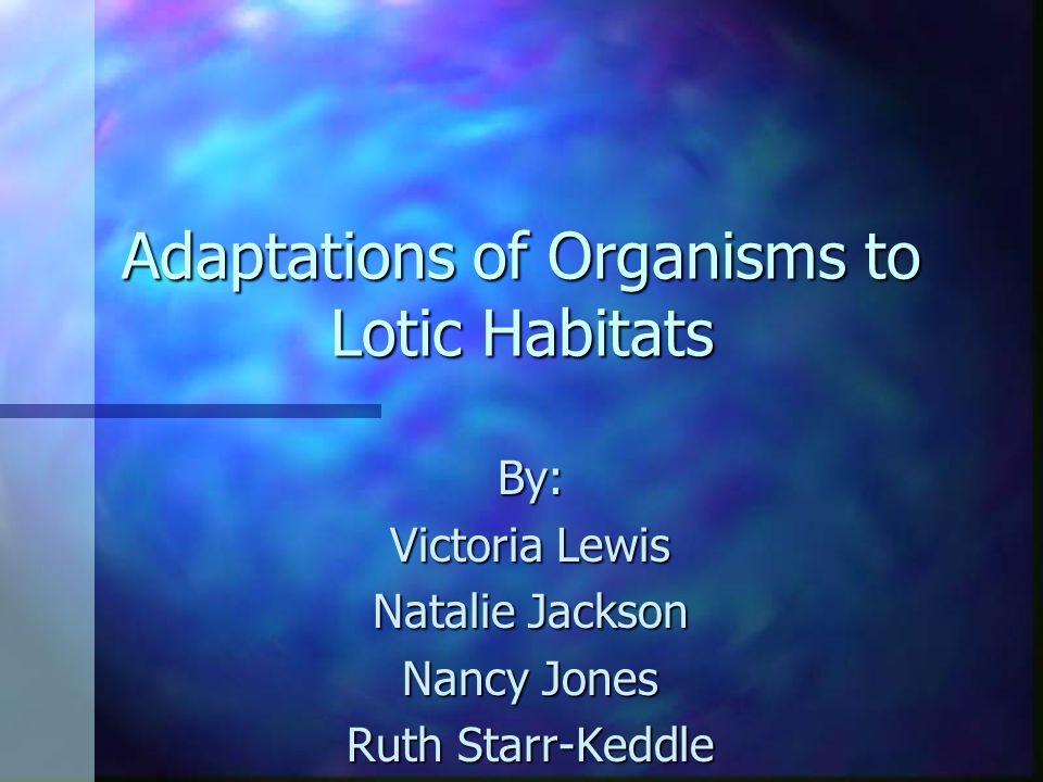 Adaptations of Organisms to Lotic Habitats By: Victoria Lewis Natalie Jackson Nancy Jones Ruth Starr-Keddle