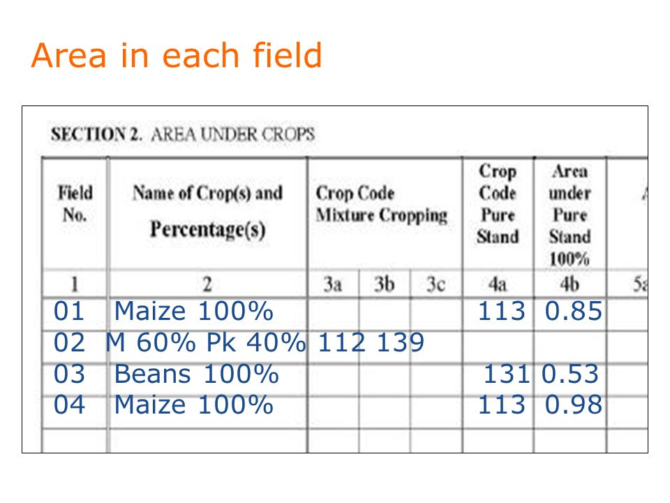 Area in each field 01 Maize 100% M 60% Pk 40% Beans 100% Maize 100%