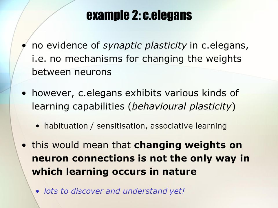 example 2: c.elegans no evidence of synaptic plasticity in c.elegans, i.e.