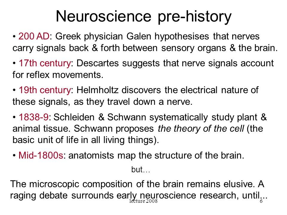 lecture 20087 1) Neurons are cells: distinct entities (or agents).