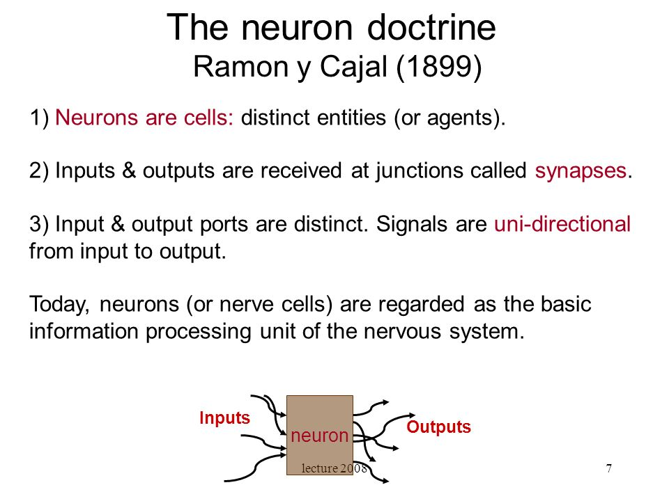 lecture 20087 1) Neurons are cells: distinct entities (or agents). 2) Inputs & outputs are received at junctions called synapses. 3) Input & output po
