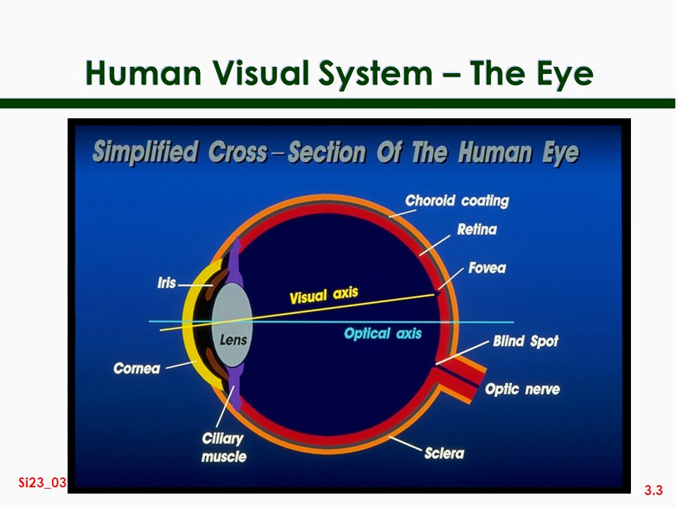 3.3 Si23_03 Human Visual System – The Eye