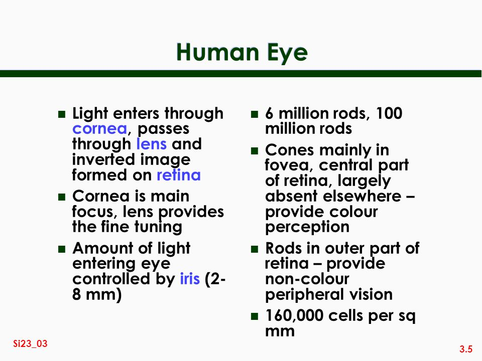 3.5 Si23_03 Human Eye n Light enters through cornea, passes through lens and inverted image formed on retina n Cornea is main focus, lens provides the