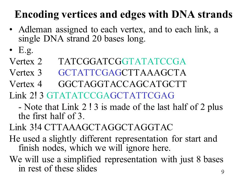 9 Encoding vertices and edges with DNA strands Adleman assigned to each vertex, and to each link, a single DNA strand 20 bases long.