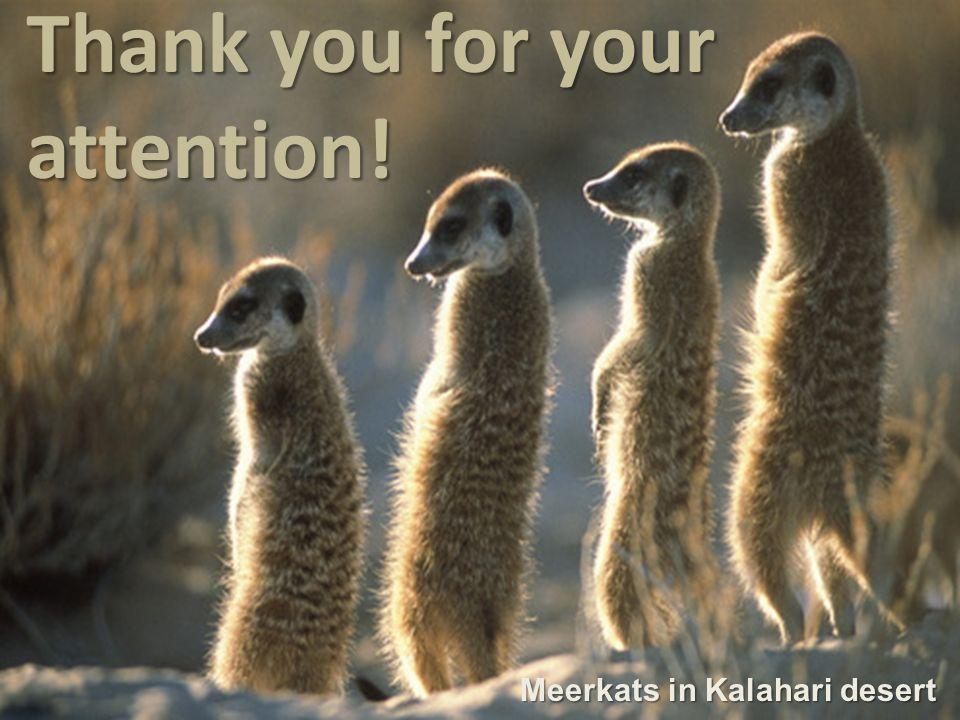 Thank you for your attention! Meerkats in Kalahari desert