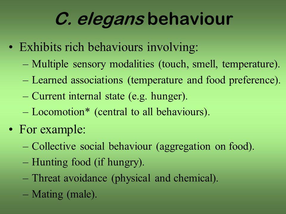 C. elegans behaviour Exhibits rich behaviours involving: –Multiple sensory modalities (touch, smell, temperature). –Learned associations (temperature