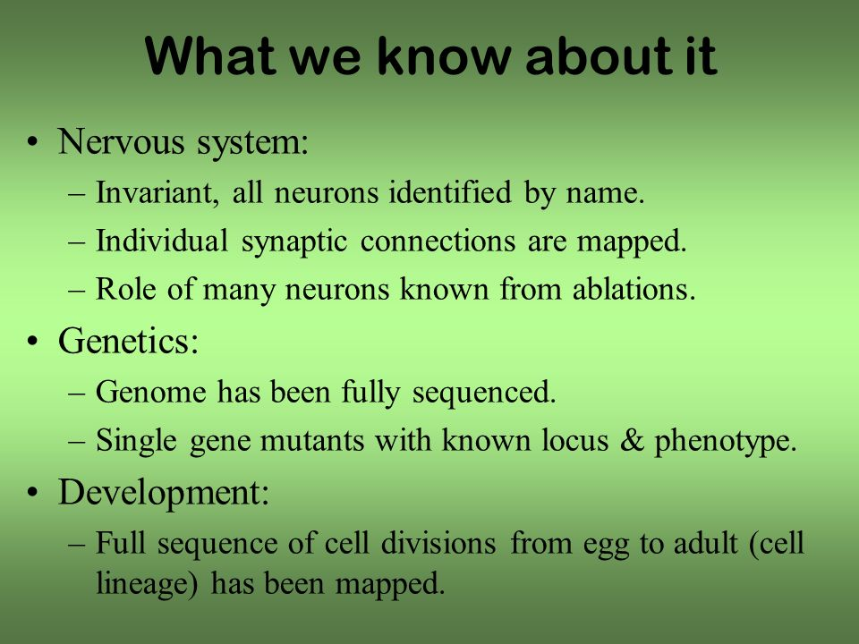 What we know about it Nervous system: –Invariant, all neurons identified by name.